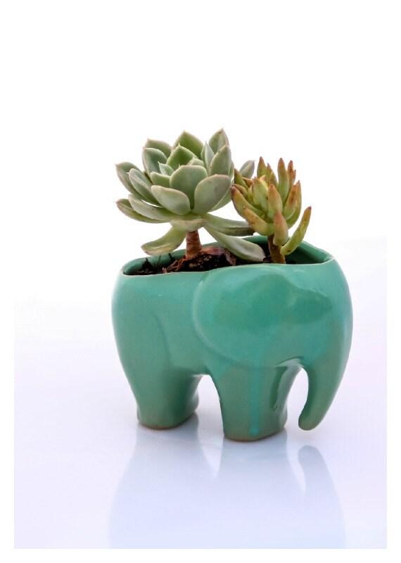 Elephant planter for succulents ceramic planters elephant