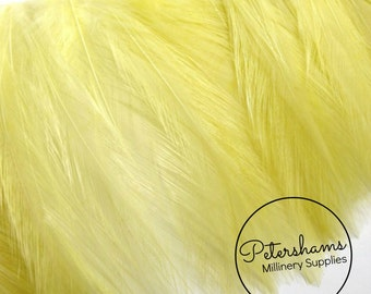 Pastel Yellow Hackle Feather Fringe for fascinators, millinery and crafts  (Around 60 feathers)