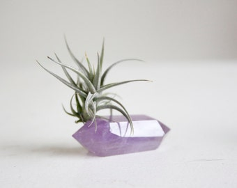 Air Plant on Amethyst Crystal, Small Size, February Birthstone Gift Under 20, Gift For Gardener, Free Spirit Indoor Garden, For Her