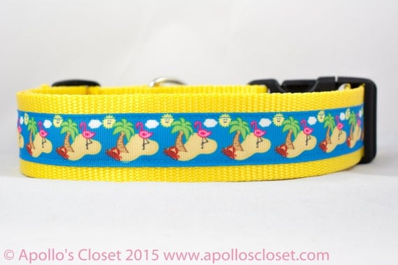 What Is Best Dog Collar For Ocean