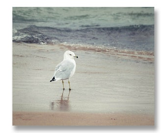 Seagull Beach Photograph, Michigan Beach Print, Seagull on Warren Dunes, water blue teal sand grass, summer dunes photo, 8x10