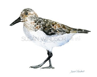 Sandpiper Watercolor Painting - 10 x 8 - Giclee Print - Beach Painting - 11 x 8.5 - Bird Art