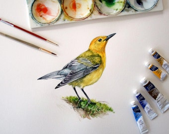 Prothonotary Warbler study - Original Watercolor