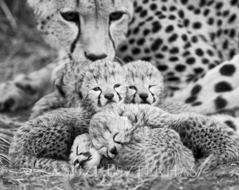Baby Cheetah Cubs Photo, Black and White Print, Baby Animal Photography, African Wildlife, Nursery Print, Baby Nursery Decor, Safari Nursery