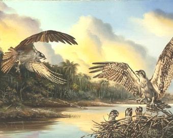Osprey wildlife bird 32x48 oil on canvas painting by RUSTY RUST / O-35