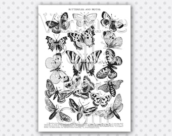 Clip Art Vintage Butterfly and Moth Collage Victorian Butterflies Clipart Printable Digital Instant Download Scrapbooking