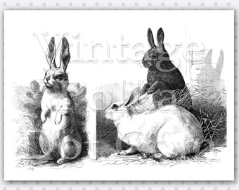 Vintage Clip Art Rabbits Bunnies Old Engravings Graphic Clipart Victorian Garden Digital Instant Download Collage