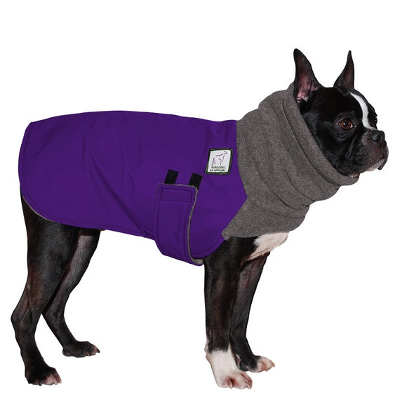 Fashion Designer Boston Terrier