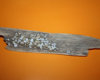 S A L E  Natural Baltic Sea treasures - Adorrable  Drifted Wood