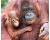 Set of quantity 5: Orangutan Mom and Baby Photo Card