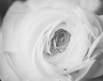 Ranunculus Print, Black and White Print or Canvas Wrap, Nature Photography, Elegant Bedroom Decor, Sensual Art, Romantic Art.
