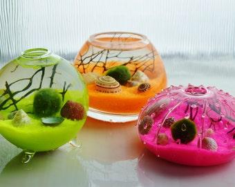 Marimo Moss Ball Aquatic Terrarium ~ Japanese Moss Ball ~ Neon Sand ~ Sea Shells ~ Seafan Branch ~ 2 Glass Vase Choices ~ Gift Idea