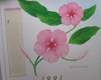 Afrin Pharmacy Calendar Poster 1991, Pharmacy Advertising Old/New, Herbs