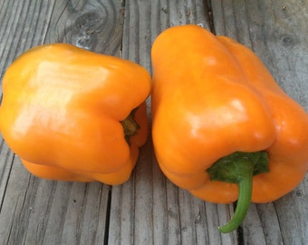 Sweet Orange Bell Pepper Italian Variety Slightly Flattened Large Crisp Juicy Sweetest Peppers Rare Seeds