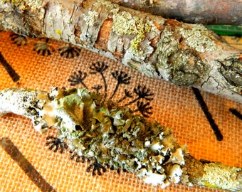 Rustic Lichen Branches - Salvaged wood - reclaimed branches - Set of 3 branches