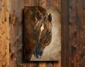 Chestnut Watching - Horse decor - Red horse decor - Horse photography - Chestnut horse photography - Animal photography - Horse art