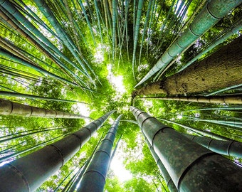 Japanese Bamboo Photograph - Gallery Wrapped Fine Art Canvas Print - Multiple Sizes