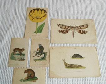 6 Vintage Plate Print  Animal And Plant  Illustrations Vintage Ephemera