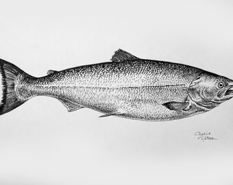 Salmon - Original ink illustration