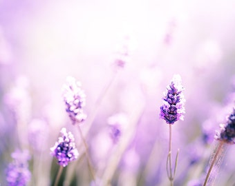 nature photography flower lavender photography floral wall decor 8x10 24x36 fine art photography spring lilac lavender purple nursery decor
