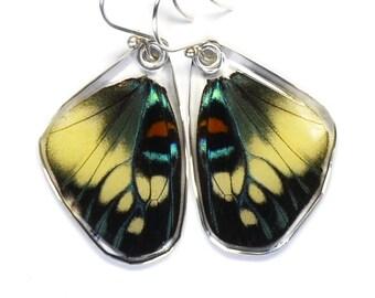 Real Day Flying Moth (Erasmia pulchera chinensis) (bottom/rear wings) earrings