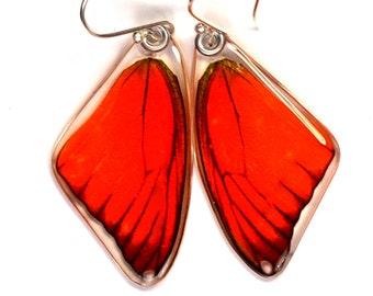 Real Orange Albatross Butterfly (Appias nero) (top/front wings) earrings