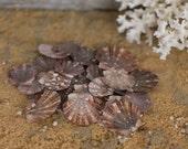 Beach Decor Flat Scallop Sea Shells - 25 Scallop Seashells