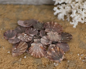 Beach Decor Flat Scallop Sea Shells - 25 Brown Scallop Seashells