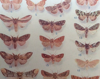 Vintage 1920s Insect Bookplate MOTH Print Illustration MOTHS Entomology Home Decor