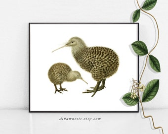 KIWI BIRD PAIR - Instant Download - printable antique bird illustration for prints, totes, cards, clothes etc. - lovely natural history art