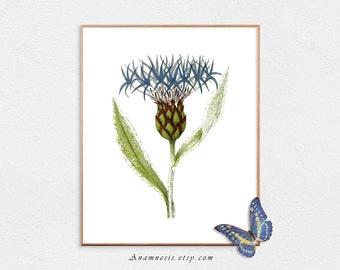 Botanical Print - MOUNTAIN CORN-FLOWER  - digital download - printable flower illustration for prints, totes, pillows, fabric, clothes etc.