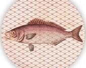 Sea Life Fish III melamine plate