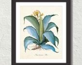 Aloe Americana Botanical Canvas Art Print - Home Decor - Multiple Sizes Starting at USD 15.00+