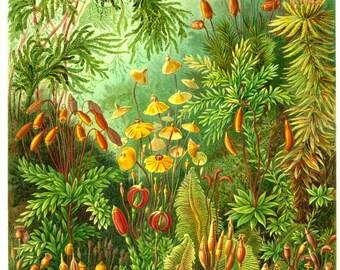 Botanical, Nature print, Botanical art, Nature life, Botanical decor, Nature decor, Nature illustration, 72
