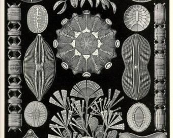 Nature print, Botanical art, Nature life, Botanical decor, Nature decor, Nature illustration, Botanical, 84