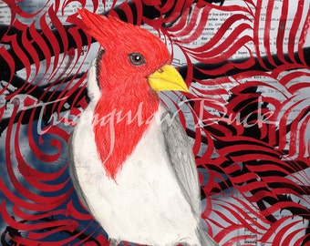 Red-Crested Cardinal. Limited Edition Signed Print. Gift for birders and bird lovers.