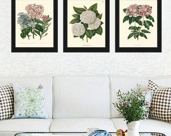 BOTANICAL Print SET of 3 Art Print  Beautiful Antique White Pink Hydrangea Flowers Spring Summer Plant Nature to Frame Home Decor Garden