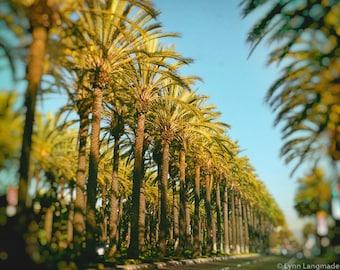 "Los Angeles Photography - palm trees street 8x10 photo city wall print 5x7 blue and green wall art california photography summer ""Sunshine"""