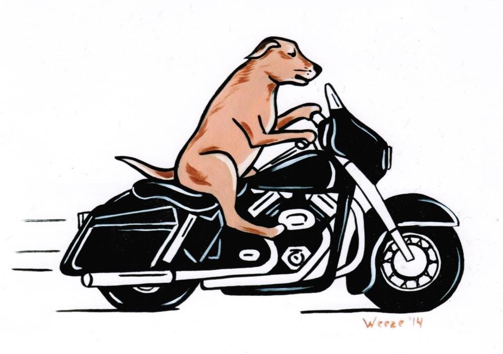 DOG'S & BIKES ATTITUDES - Page 2 Il_fullxfull.744336030_aa2j