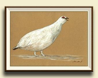PRINT-Lagopus Ptarmigan Grouse - bird wildlife animal decor- bird animal wall art -Grouse-  gamebird decal- Art Print by Juan Bosco
