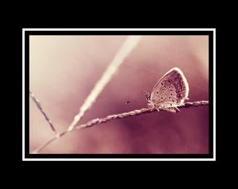 Butterfly Photograph, Ethereal Dusty Rose Pink Nature Photography Horizontal Wall Art, Butterfly Fine Art Nature Photo Print