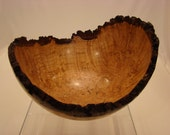 Turned Maple Burl Bowl - Natural Edge