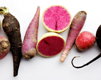 Color Surprise Multi-Variety Fall Radish Mix -  Heirloom rare seeds