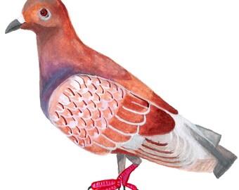 Paloma (Pigeon) #3