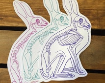 Bunny Rabbit Anatomy Stickers - Set of 3 - Science Sticker - Bunny Sticker - Rabbit Sticker - Die Cut sticker - Easter Sticker - Anatomy Art