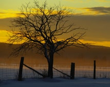 Photo of a beautiful sunset in winter with a tree and a fence,  printed on glossy premium photo paper