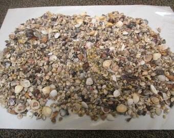2.3 pounds of small decorative shells
