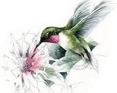 Ruby-throated Hummingbird watercolour - bird wildlife art - nature print of original artwork