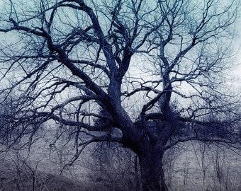 Mystery Art Tree, Nature Fine Art, Tree Print, Nature Photography, Tree Photography, Wall Decor, Photographic Print, Home Decor, Fine Art