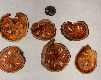 Quince Pod Slices